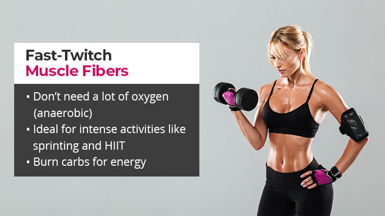 what are fast twitch muscle fibers