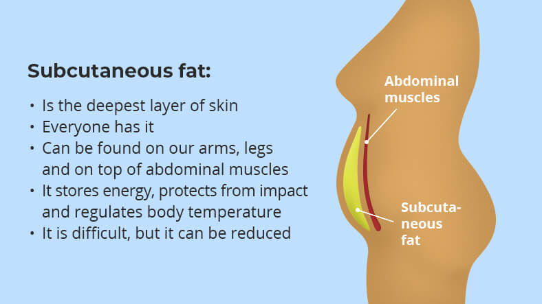 what is subcutaneous fat